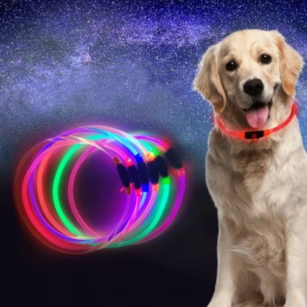 5 Best LED Dog Safety Collars and Harnesses of 2021