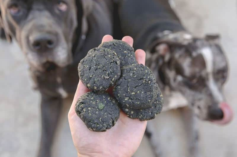 WHEN AND HOW TO USE ACTIVATED CHARCOAL FOR DOGS