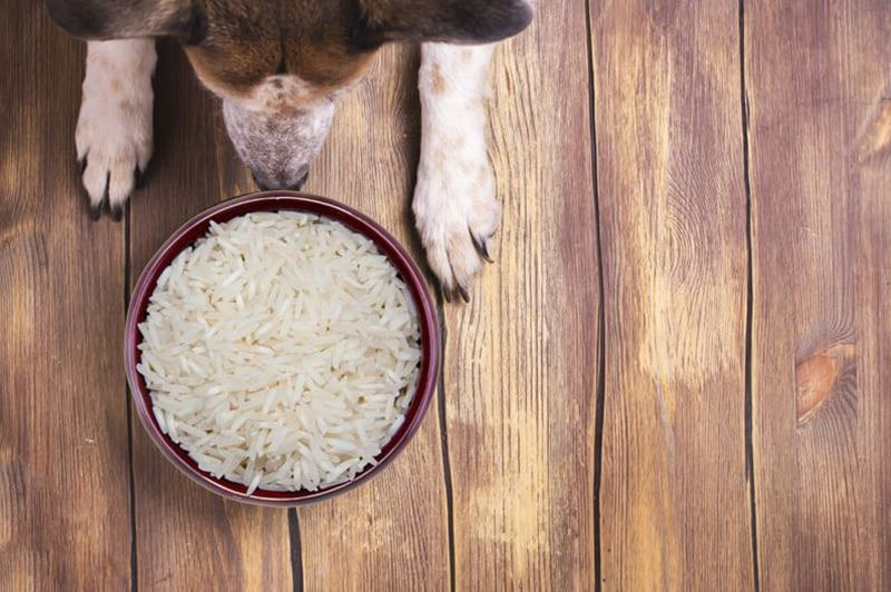 CAN DOGS EAT RICE? DOG DIGESTION – THE FACTS