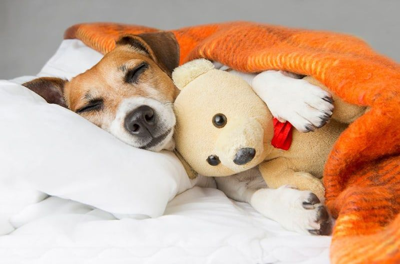 CAN DOGS CATCH COLDS? YOUR DOG HEALTH QUESTIONS ANSWERED
