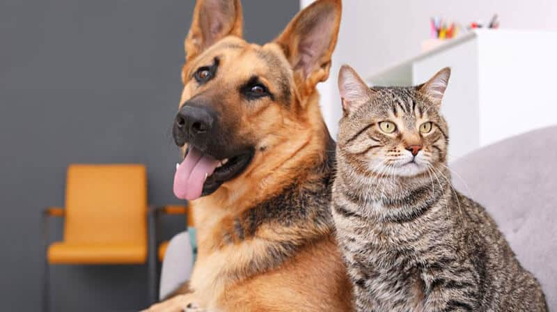 HELPING YOUR CAT AND DOG BECOME BEST BUDDIES – SHARE THE LOVE