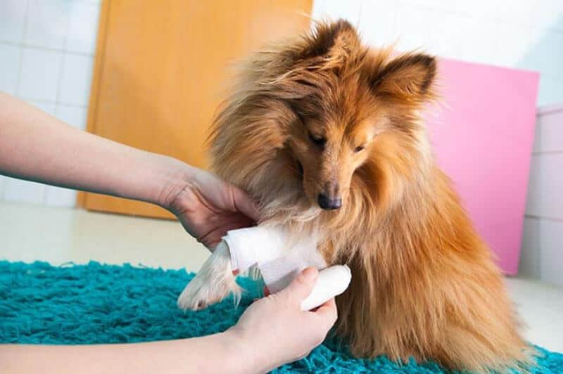 WHAT SHOULD YOU DO IF YOUR BELOVED PET IS INJURED?