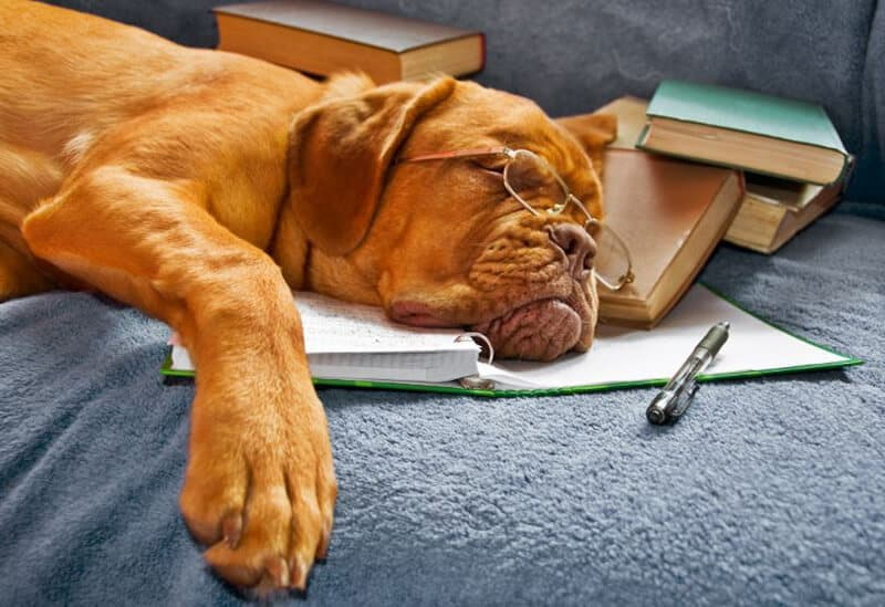 OUR 5 FAVORITE DOG TRAINING BOOKS – POSITIVE TRAINING FOR YOUR POOCH
