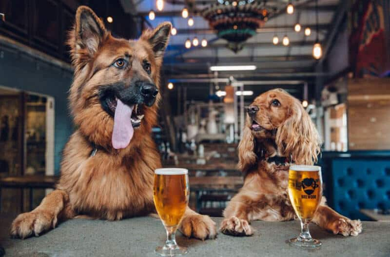 WHAT TO DO IF YOUR DOG DRINKS ALCOHOL – OUR EXPERT GUIDE