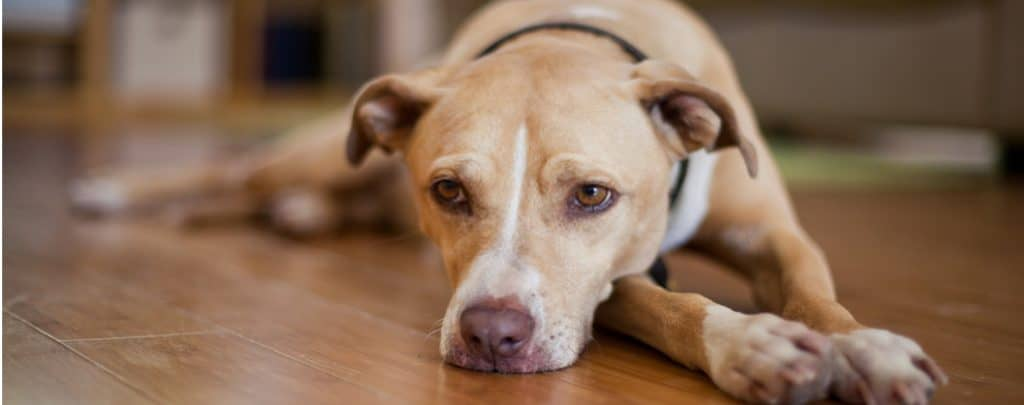 DOES YOUR DOG SUFFER FROM HEARTBURN OR INDIGESTION? TREATING ACID REFLUX IN DOGS