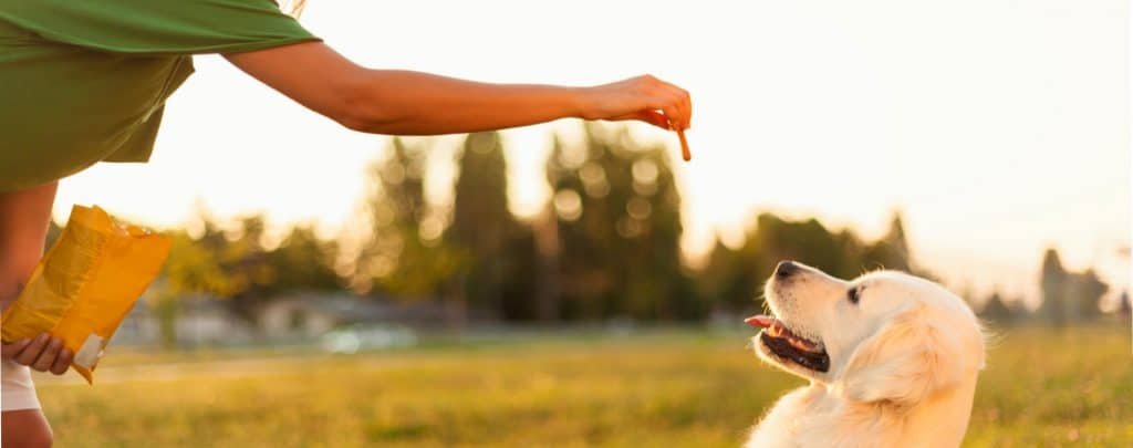 HOW TO TRAIN AN AGGRESSIVE DOG – SAFELY