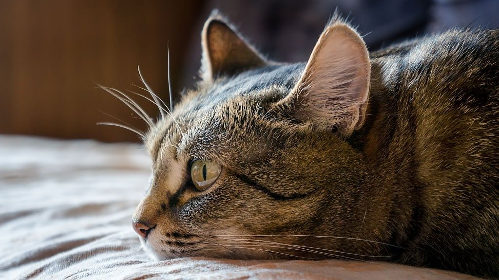 Natural Remedies for Cat Constipation: What You Need to Know for At-Home Cat Care