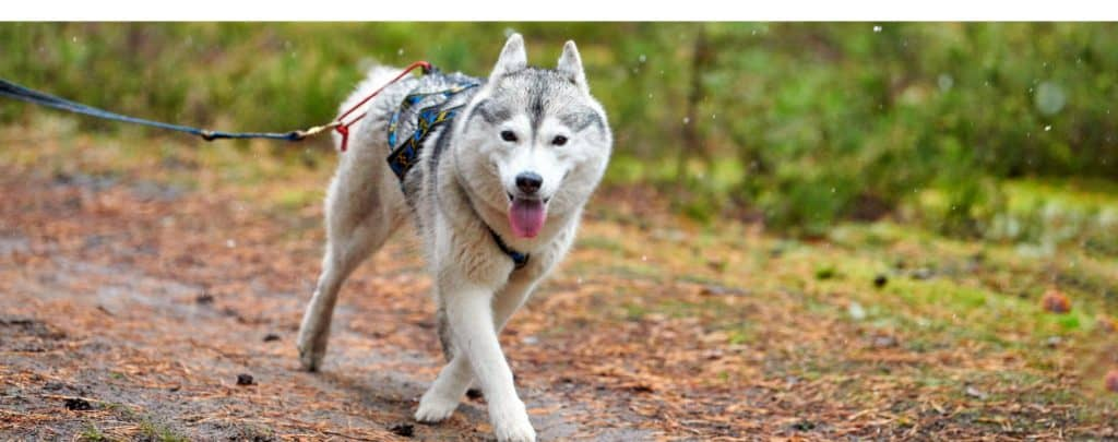 OUR BEST DOG HARNESSES – MAKE YOUR WALK COMFORTABLE AND FUN!