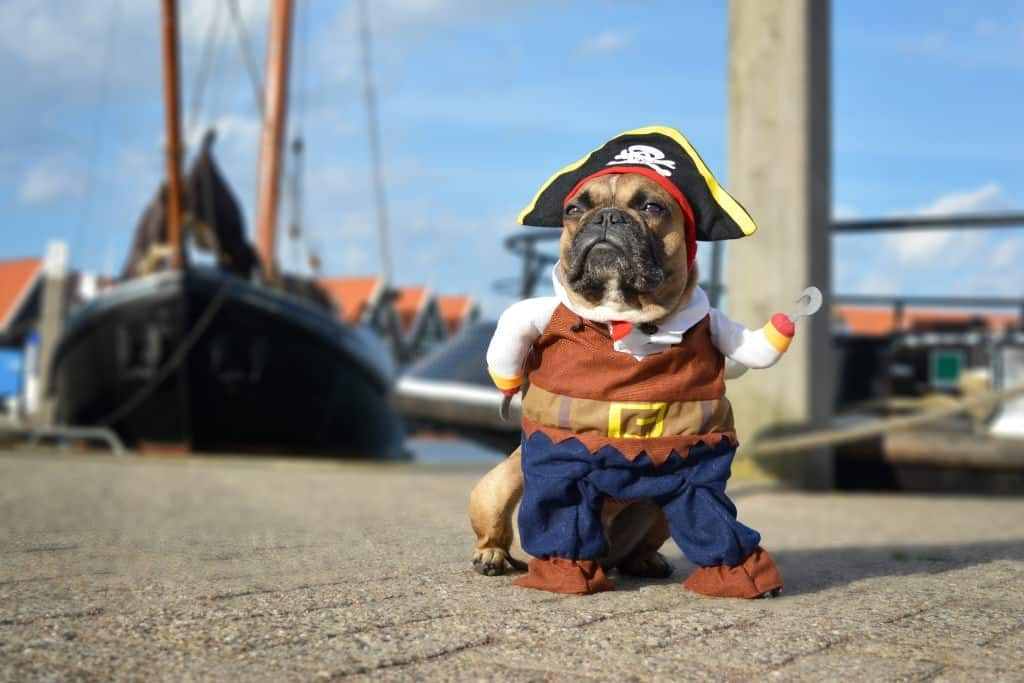 AWESOME DOG OUTFITS – DOGGY DRESSING-UP