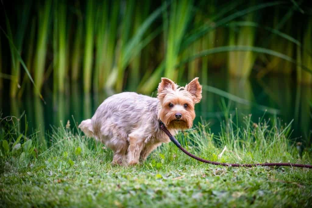 BLOOD IN YOUR DOG'S STOOL? HOW TO HELP YOUR DOG FEEL BETTER
