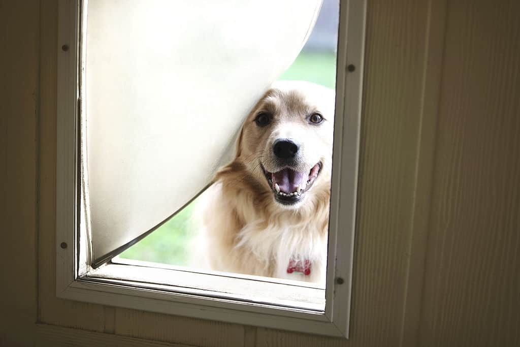 OUR TOP 5 DOG DOORS – GIVE YOUR DOG THE FREEDOM TO CHOOSE