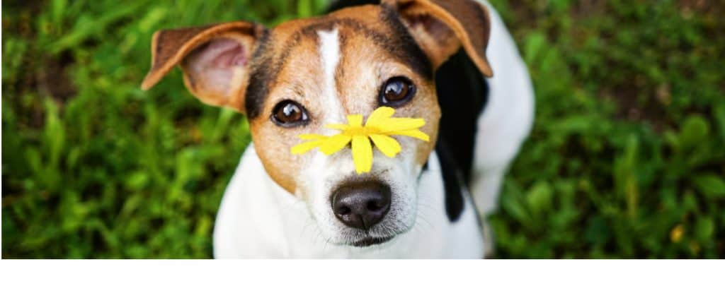 OUR RECOMMENDED DOG FOOD FOR DOGS WITH ALLERGIES