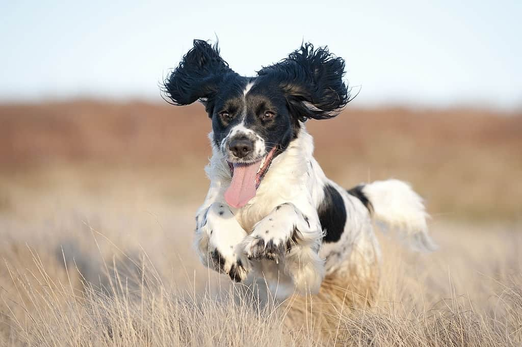 TRIED AND TESTED JOINT SUPPLEMENTS FOR DOGS – HELPING YOUR PET STAY COMFORTABLE