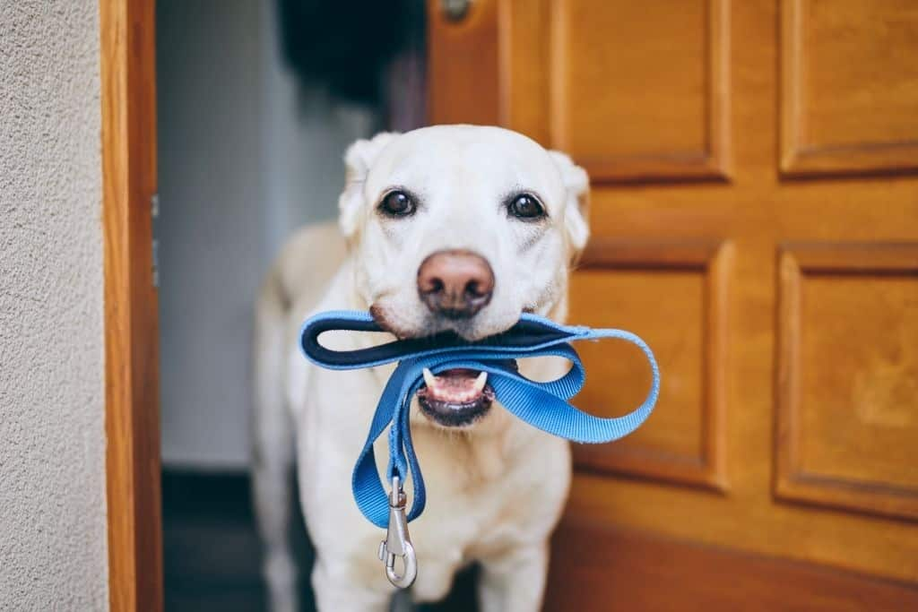 OUR FAVORITE DOG LEASHES.  Walking your Dog Safely and Comfortably