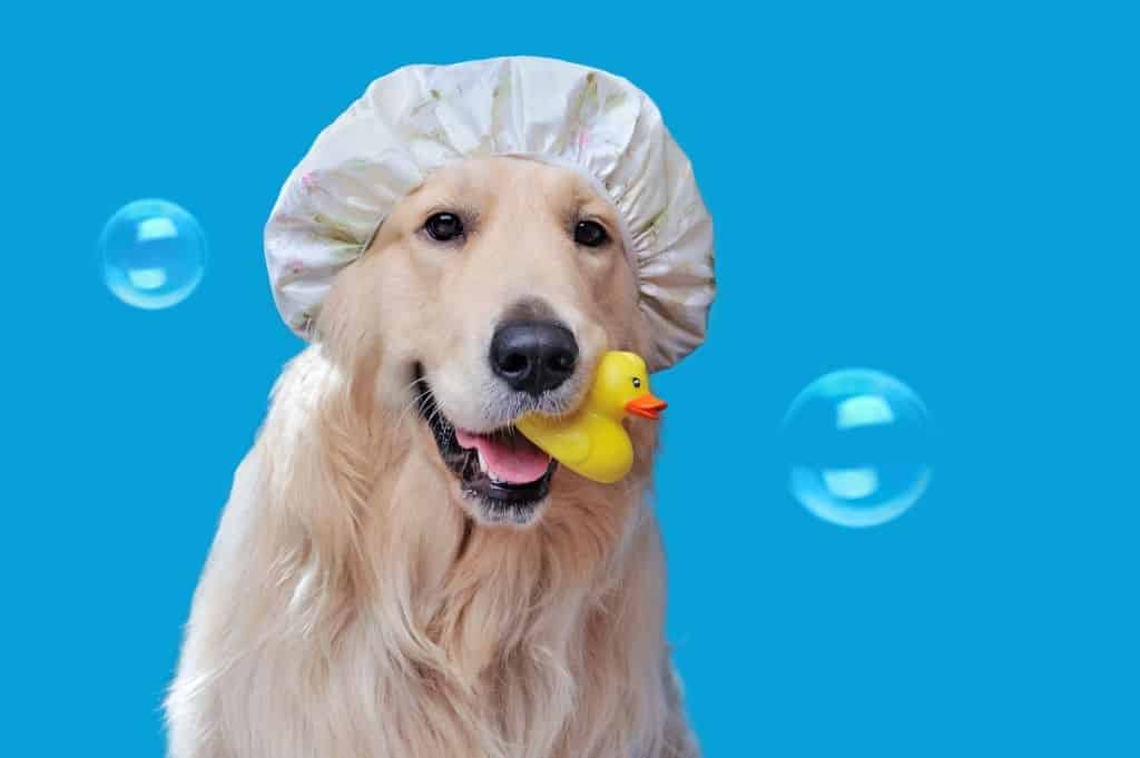 KIND AND GENTLE DOG SHAMPOO – TREAT YOUR DOG TO THE BEST