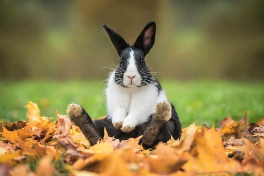 Get Rid of Rabbits in Your Garden – Most Effective and Humane Home Remedies for Deterring Rabbits