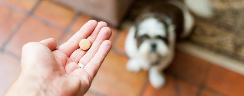 CAN I GIVE MY DOG ASPIRIN? HOW MUCH IS TOO MUCH? Caring for Your Furry Friend