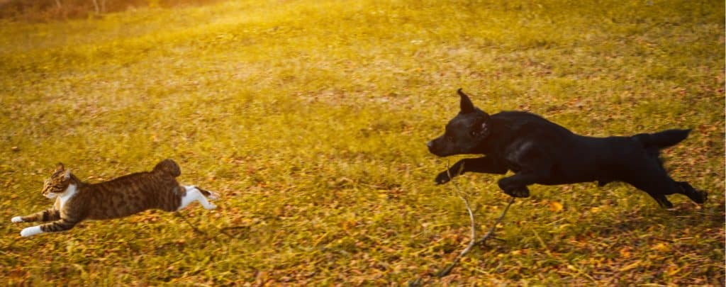 HOW TO STOP A DOG CHASING CATS – TRAINING YOUR DOG THE RIGHT WAY
