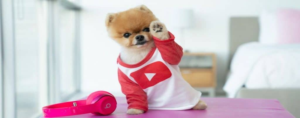 WHAT BREED OF DOG IS JIFFPOM? THE ADORABLE POPULAR PUP