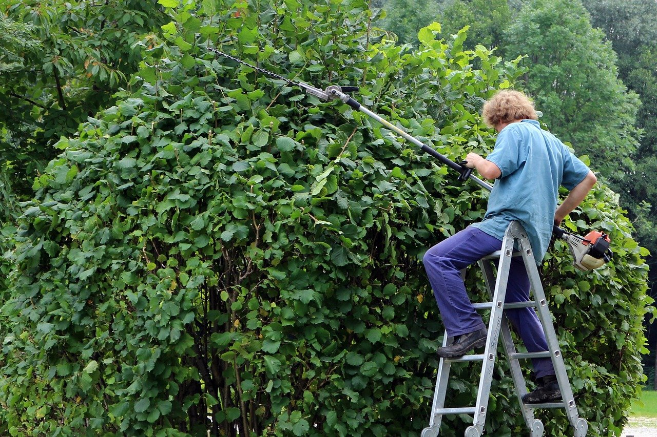5 Best Hedge Trimmers to buy in 2021