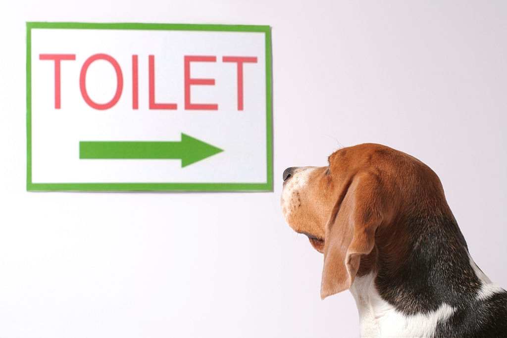 Natural Remedies for Dog Urinary Incontinence
