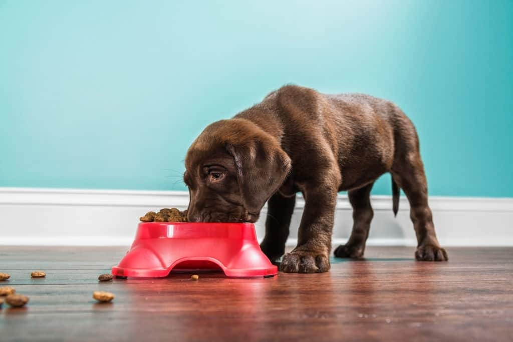 OUR FAVORITE FOOD FOR PUPPIES – PERFECT FOR YOUR FURBABY