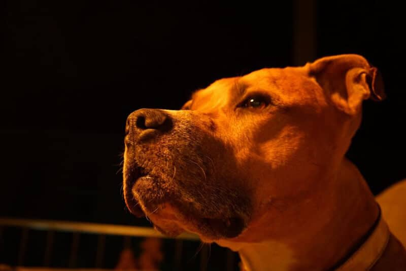 12 Things To Do When You Find A Stray Dog In Night