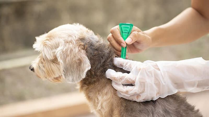 Best Flea And Tick For Dogs