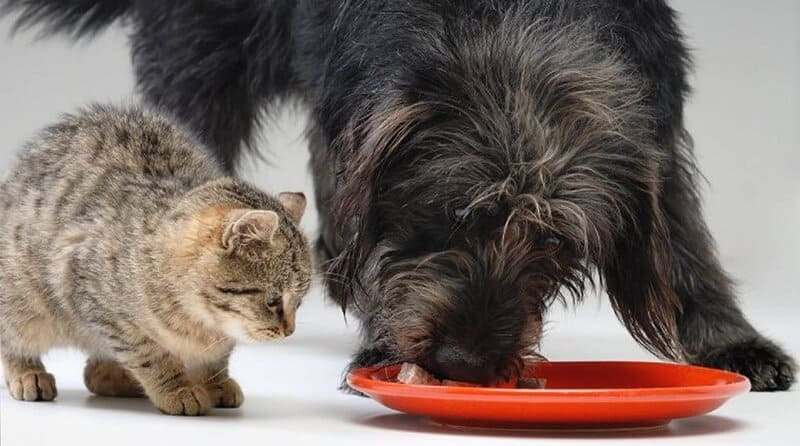 Complications of Feeding Cat Food to Dogs