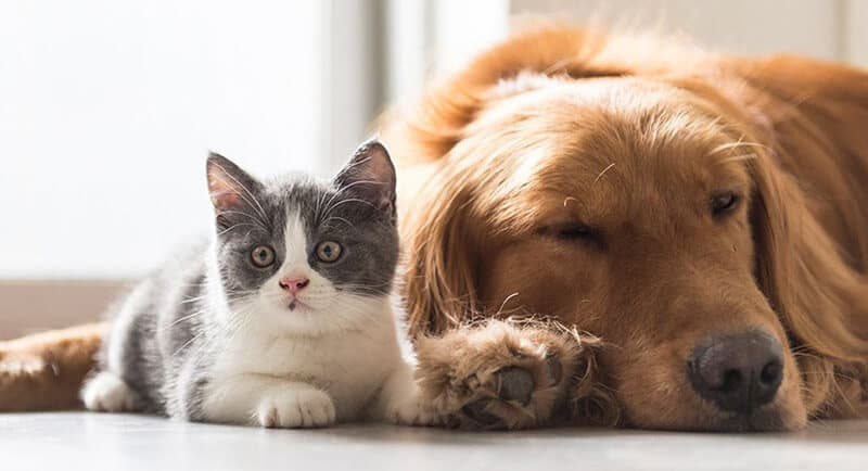 Introducing Cat and a Dog for the Very First Time