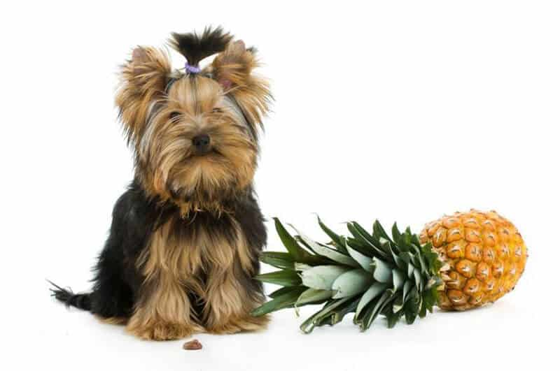 Is It Safe to Bring Pineapple To Dogs
