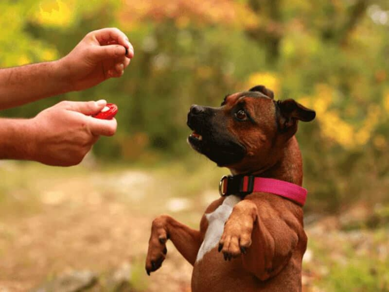 Preparing to Clicker Train Your Dog - How To Use A Clicker To Train A Dog