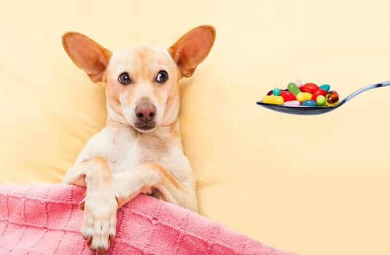 The Most Typical Antibiotics For Dogs
