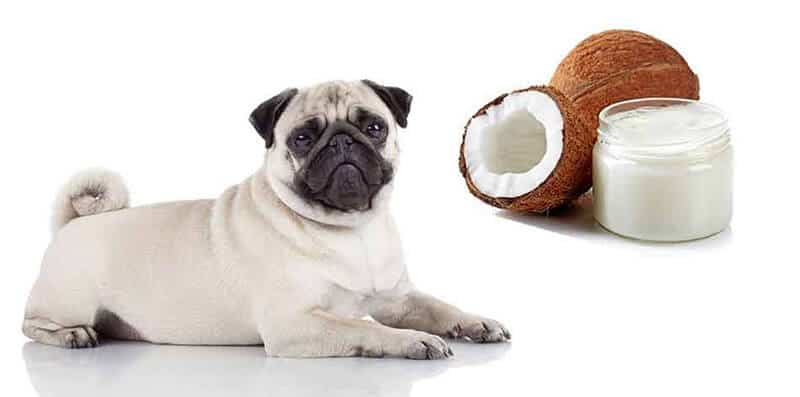 The Science Behind Coconut Oil