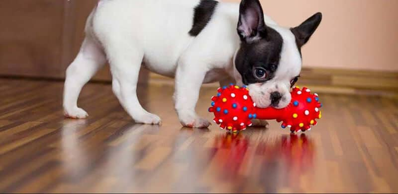 Top 101 Best Dog Toys