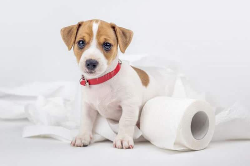 What Are the Indications of Dog Constipation