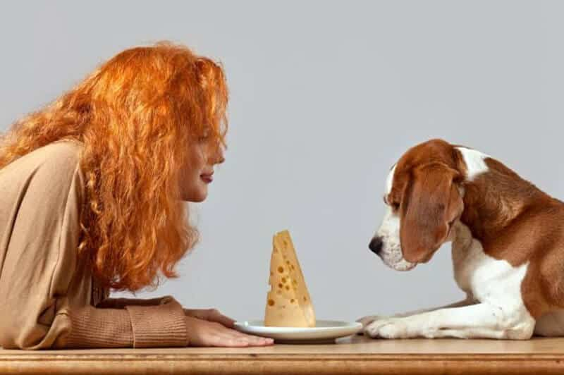 When Is Cheese Alright For Dogs To Eat