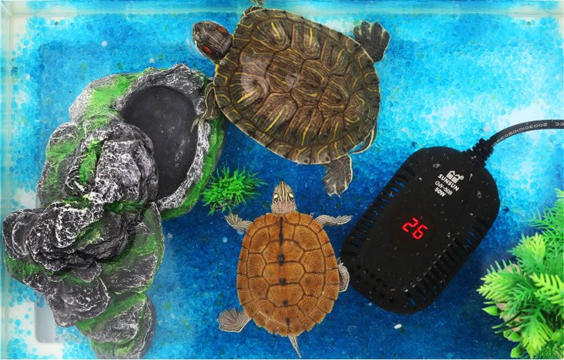 5 Best aquarium heaters of 2021 tested and reviewed