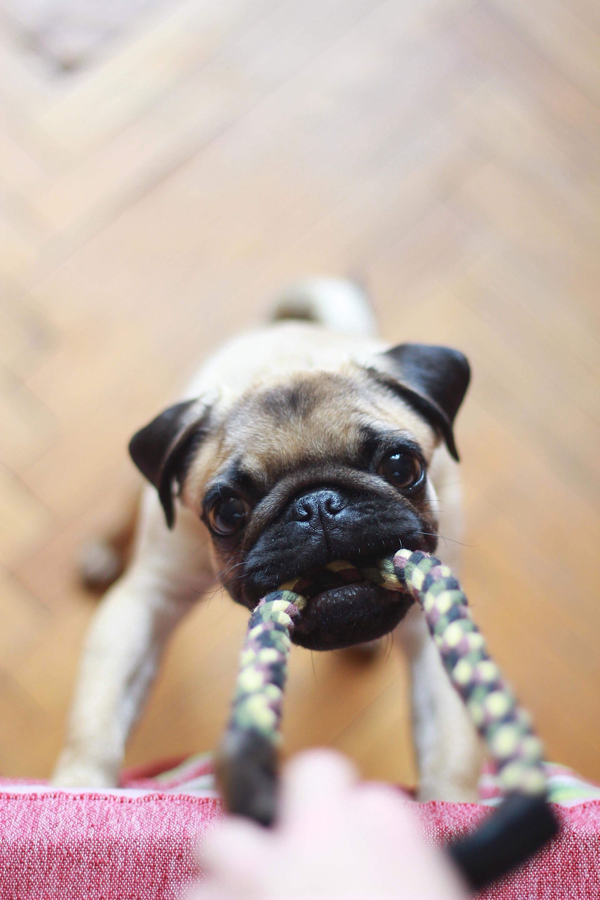 Top 5 Best Indestructible Dog Toys For Heavy Chewers