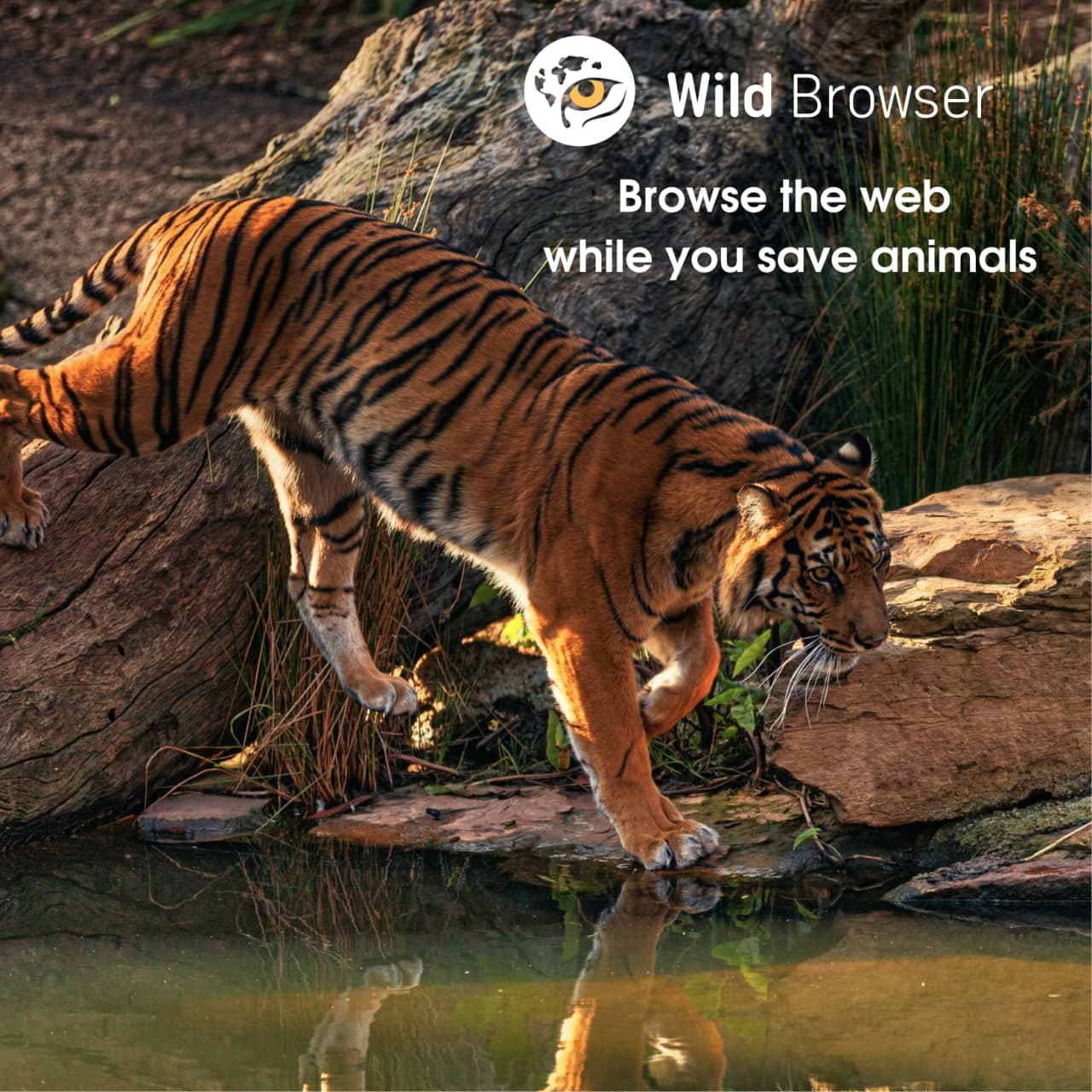 Wild Browser - save wildlife while browsing the web